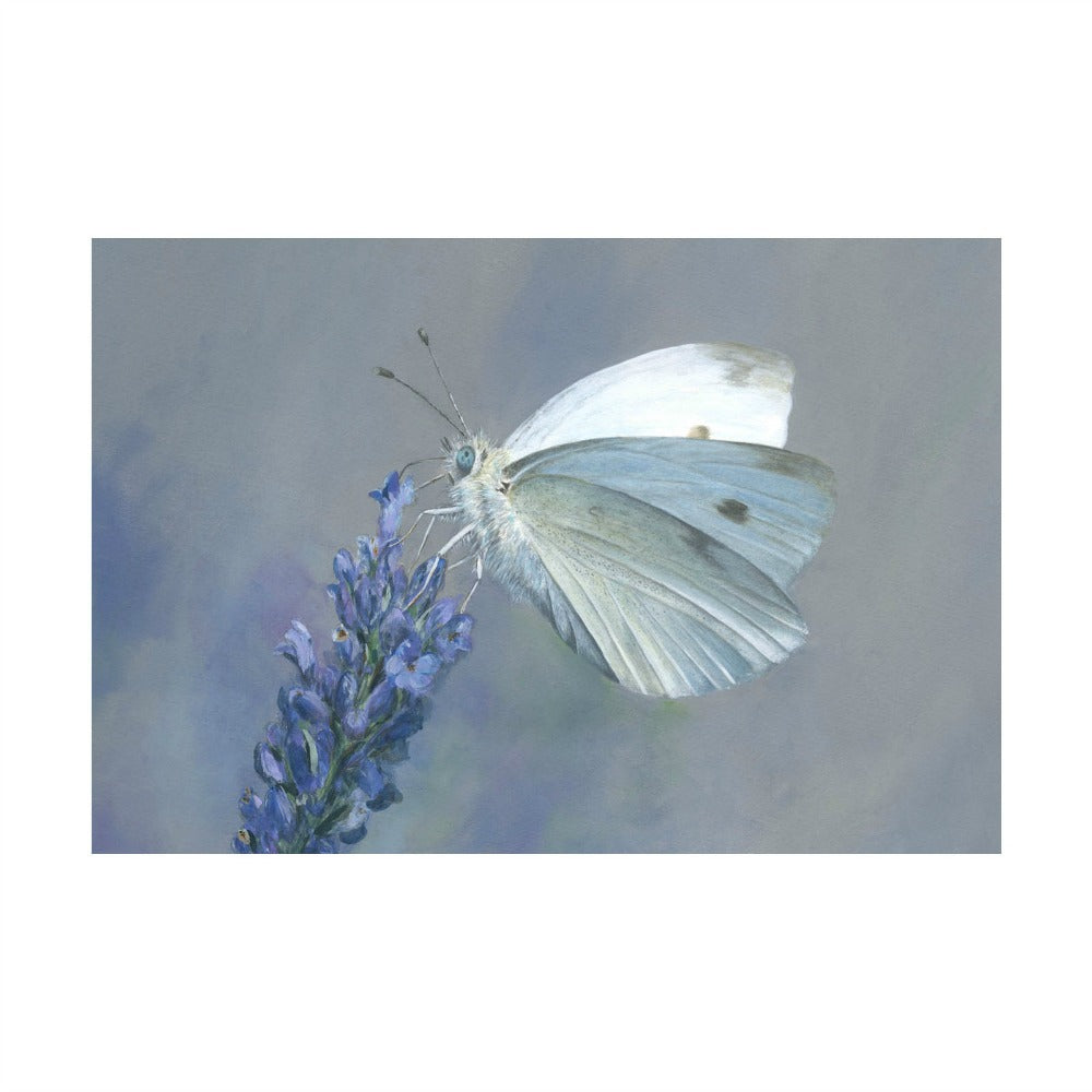 David Pooley Art Cabbage White A3 Print
