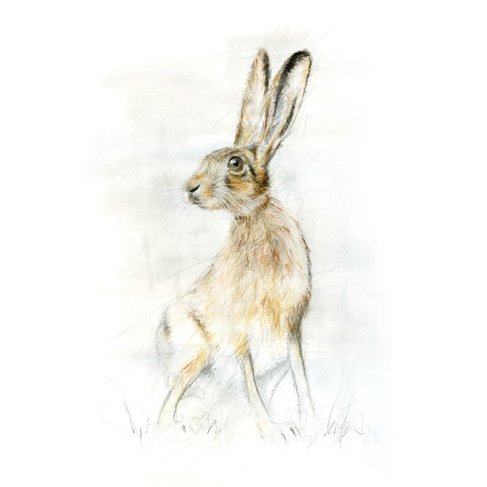 David Pooley Art Harry Hare A3 Print