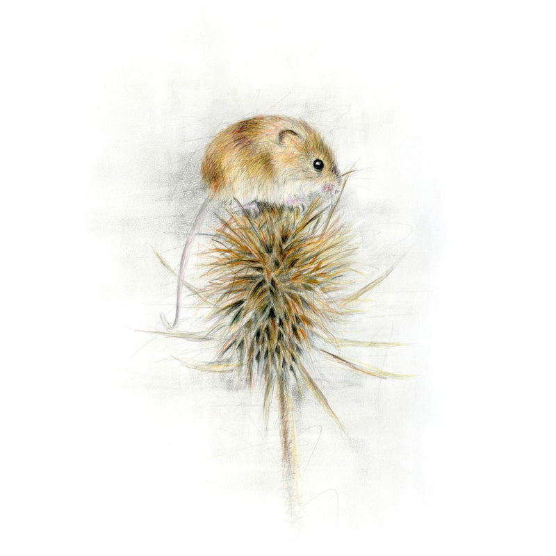 David Pooley Art Harvest Mouse A3 Print