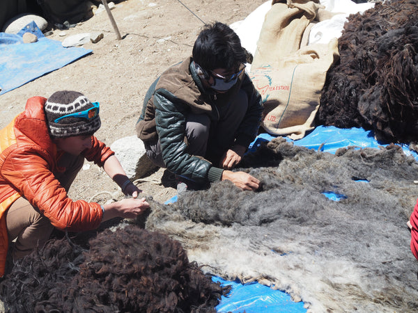Jimmy and Angtak collecting the sheep wool in Kharnak.