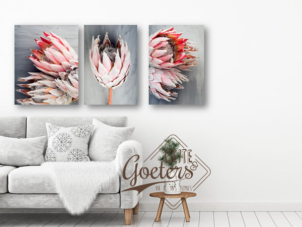 Protea Grey Series Three in one Set of 3