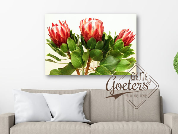 Protea Trio Red