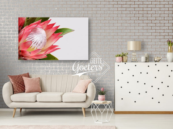 Protea Bright Pink New Left
