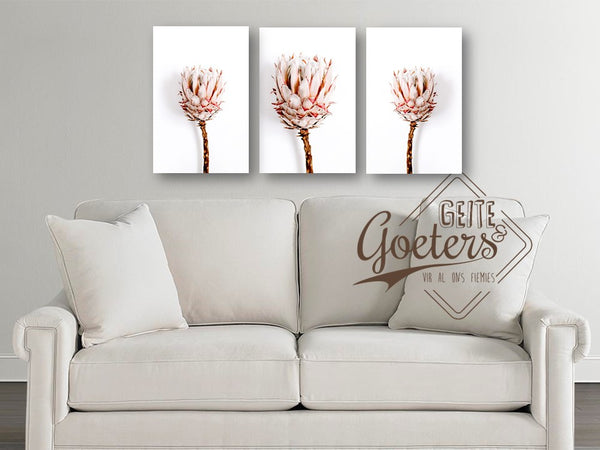 Protea White Series Single Set of 3