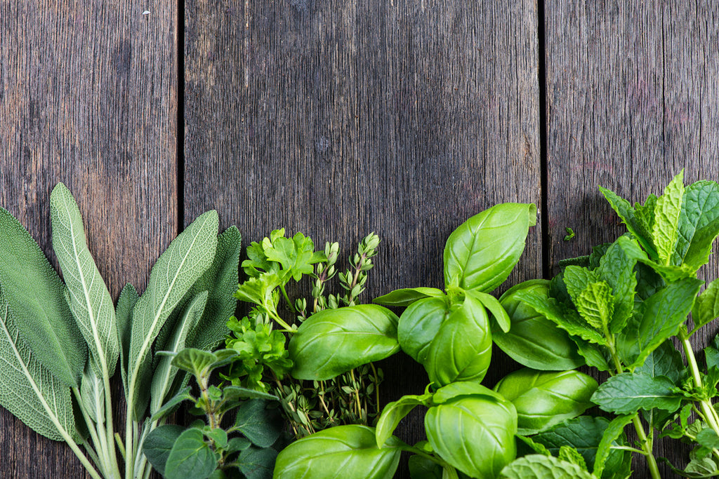 Starting an Organic Spring Herb Garden