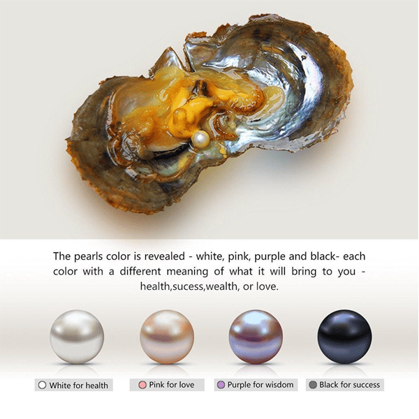 4 Pack: Luxury Wish Pearl In Oyster Necklace Gift Set