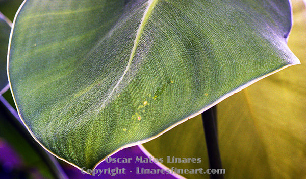 """Detail of a Leaf"" - Botanical Art"