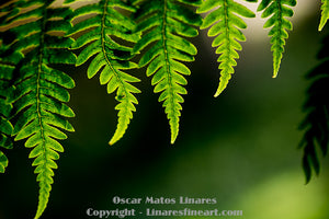 """Edges of the Ferns"" - Botanical Art"
