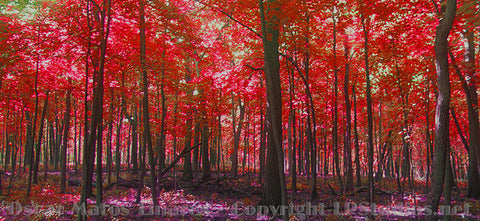 """Red Forest"" - Landscapes Art"