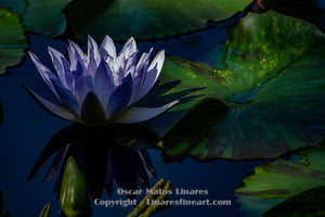 """The blue zone"" - Botanical Art"
