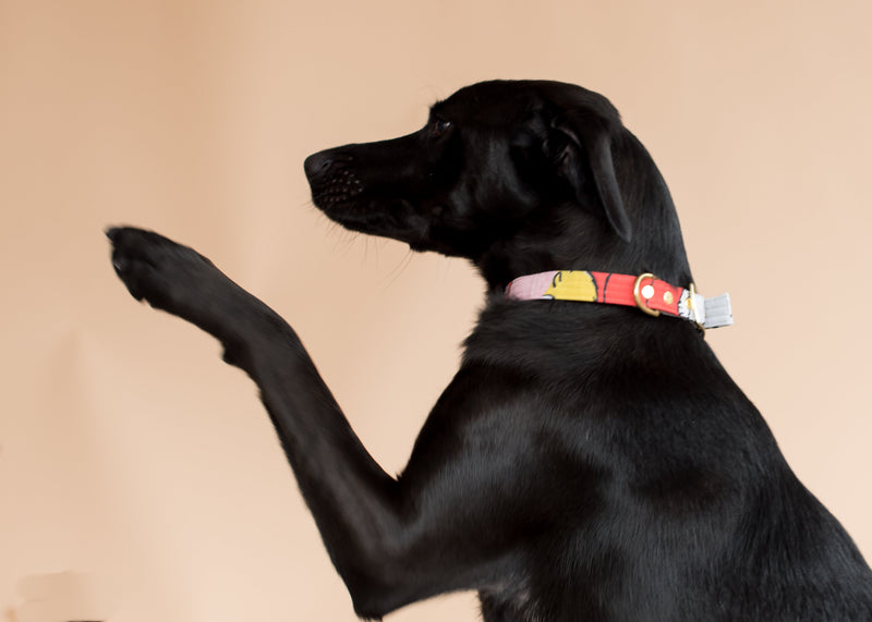 BEAST + BABE | Charlie Brown Collar - Dog Collar Animal Accessory