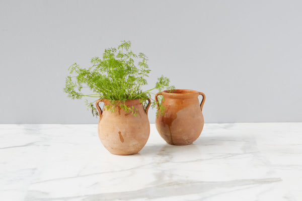 Basil Herb Pot