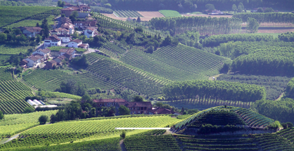 2014 Barolo Offer #1