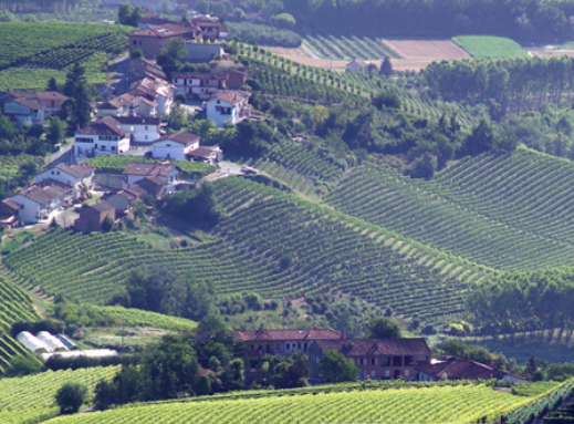 Barolo 2016: Cavallotto and Oddero