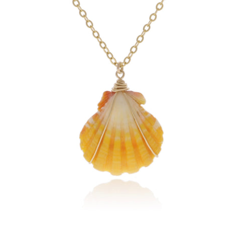 Sunrise Shell wrapped in Gold