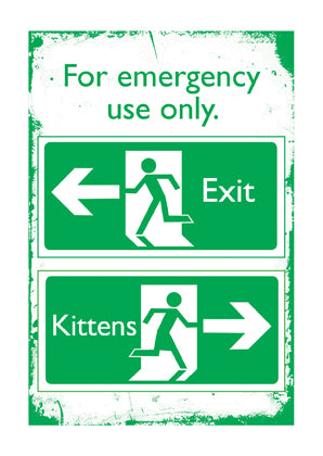 Emergency Kittens!