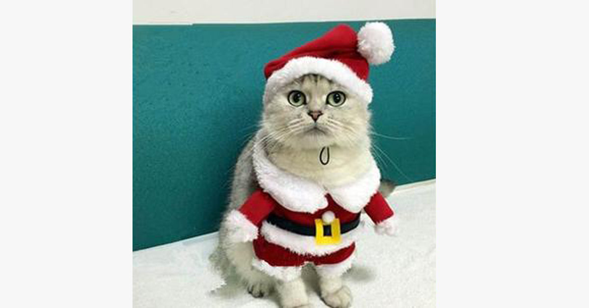 Cats Santa Outfit – The Meow Shop