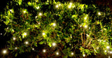 5mm warm white LED net lights 100ct. bulbs 4'x6'