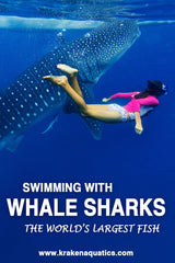 Swimming with Whale Sharks - The World's Largest Fish