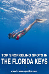 Top Snorkeling Spots In The Florida Keys