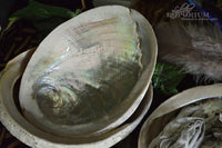 Abalone Shell - large