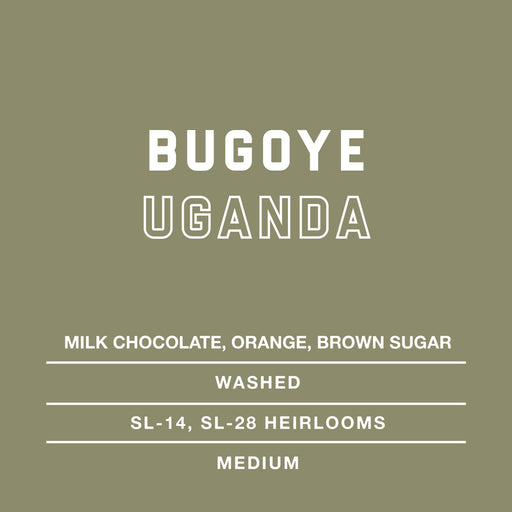 Bugoye Uganda Specialty Single Origin Coffee