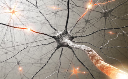 Can Damaged Nerves Regenerate? New Research Finds Answers!