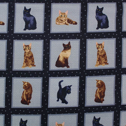 Printed Animal Cotton - Kitten Playtime Panel