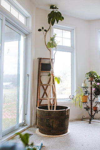 diy plywood reclaimed whisky barrel planter