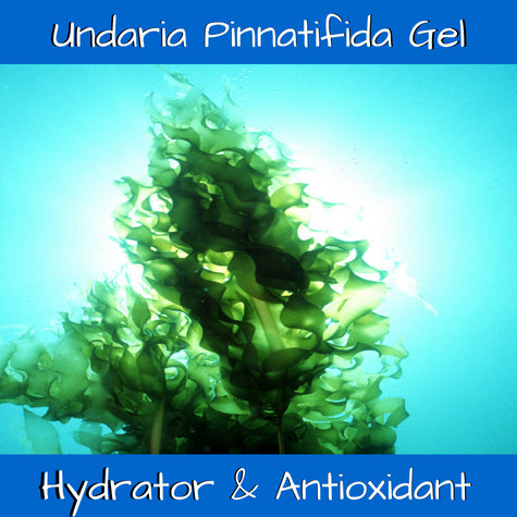Undaria pinnatifada extract
