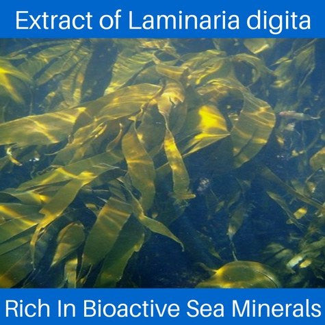 Laminaria digitata extract