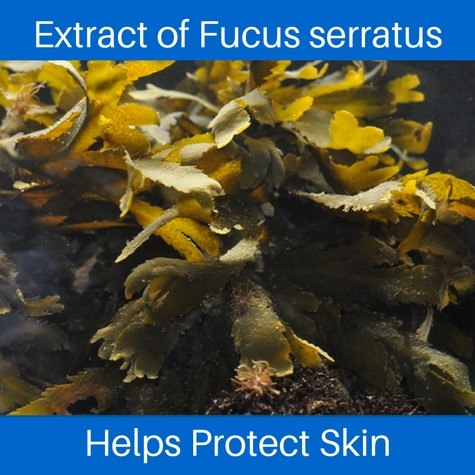 Fucus serratus extract