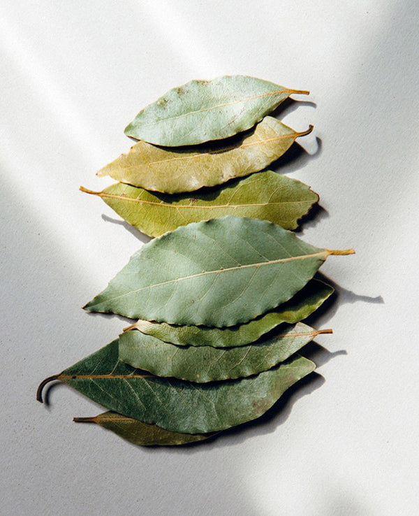BALSAMIC BAY LEAVES REFILL
