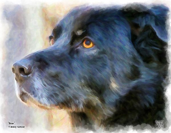 McRae portraits creates pet portraits. Stunning portraits of your clients pets