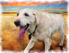 beautiful pet portraits by McRae Portraits