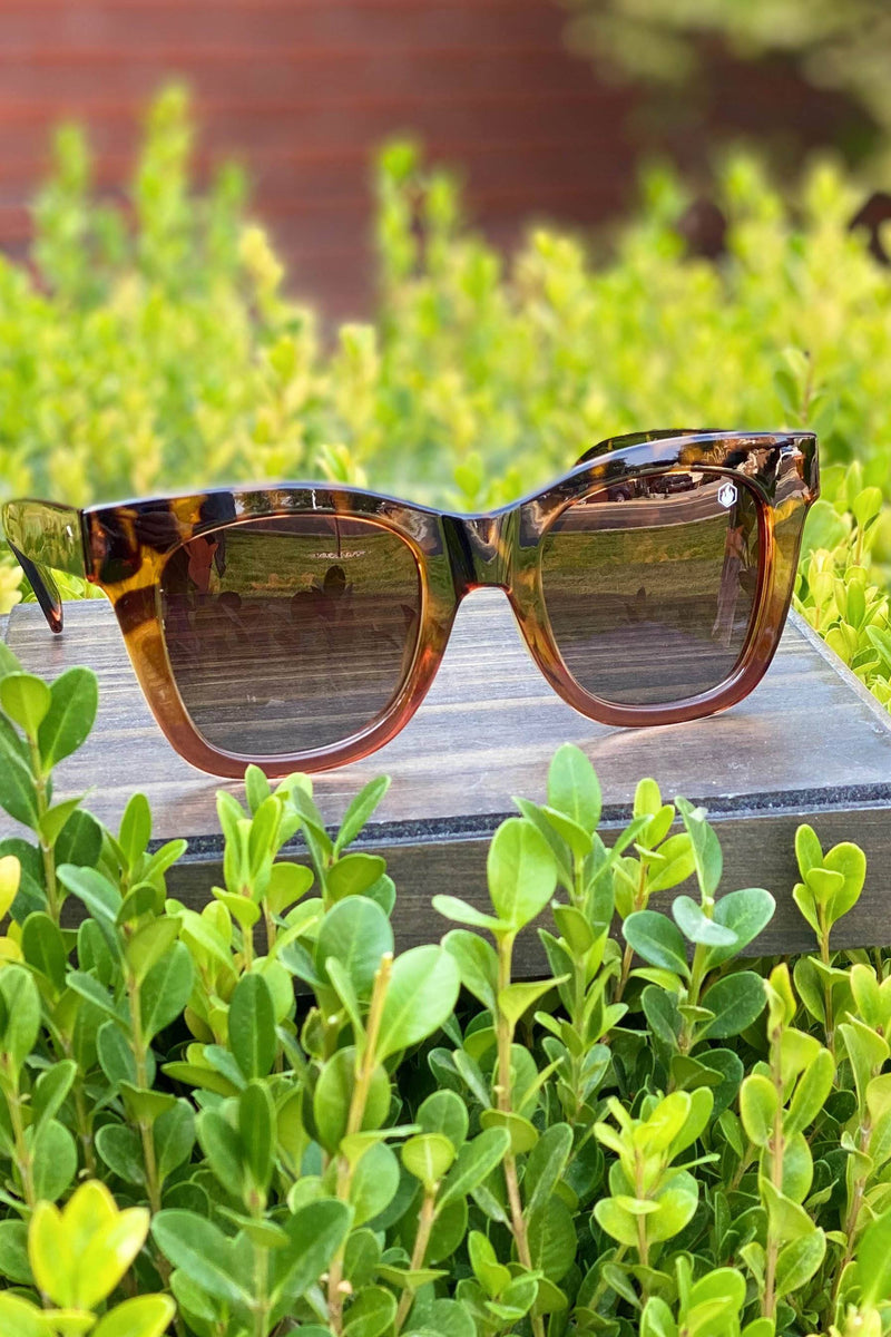 American Bonfire Adios Sunglasses in Tortoise