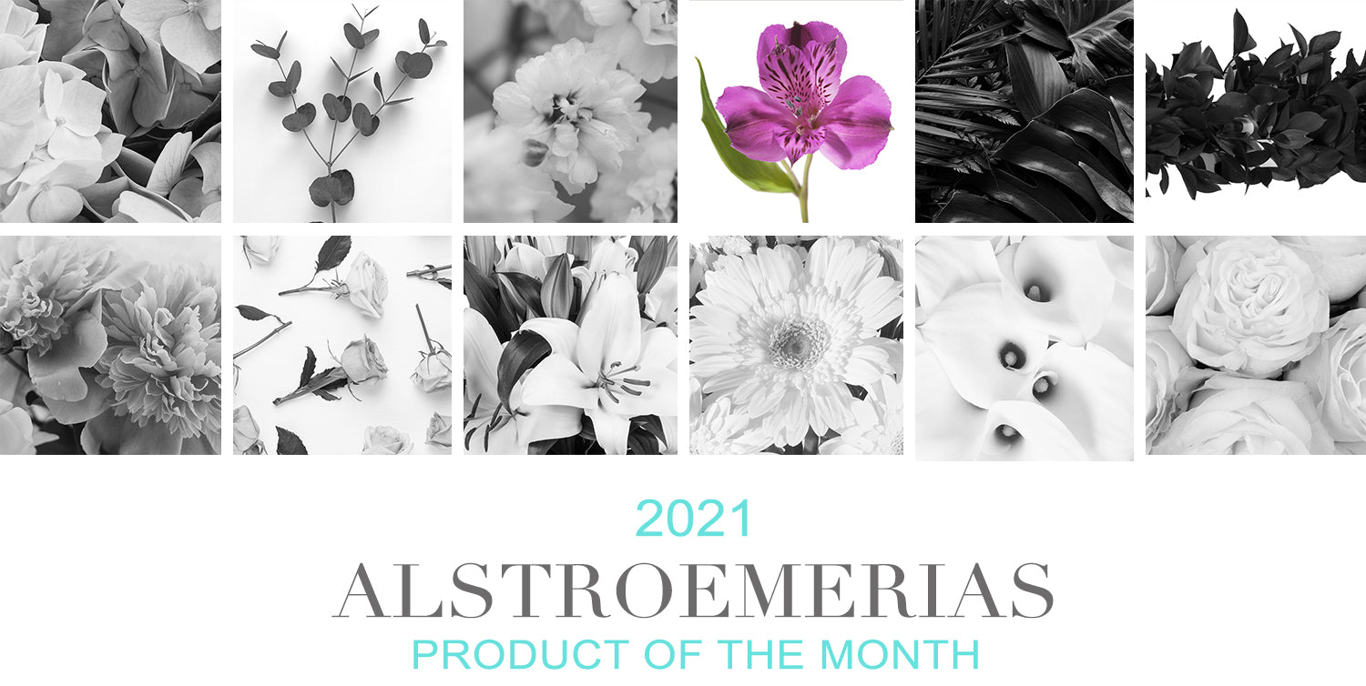 Alstroemerias Product Of The Month