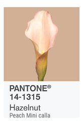 HAZELNUT PANTONE OF THE YEAR 2017