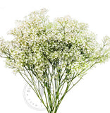 wholesale baby's breath