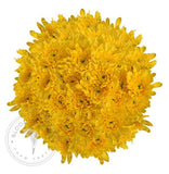 Pompom Cushion Daisies wholesale