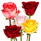 Natural Fresh Flowers - Assorted Roses Red/Pink/Yellow/Novelty