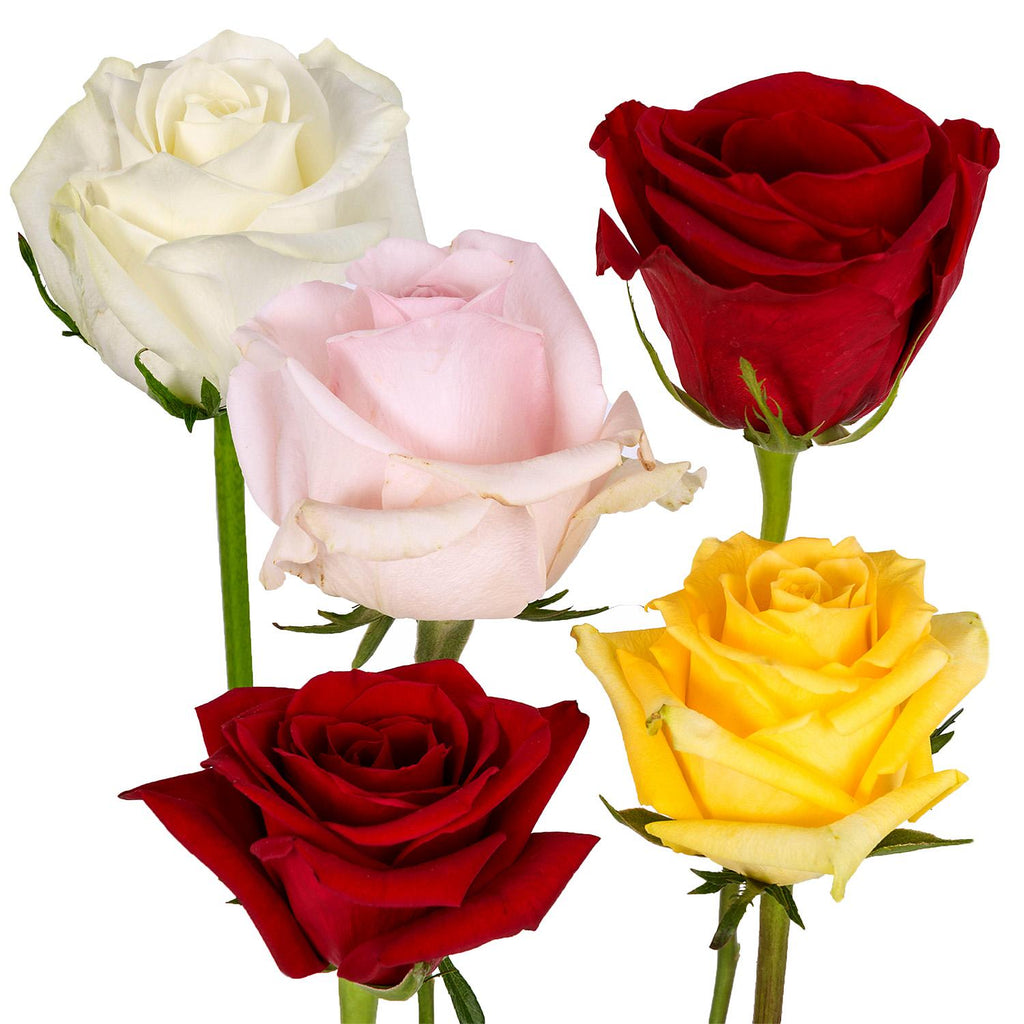 Natural Fresh Flowers - Assorted Roses Red/Pink/Yellow/White