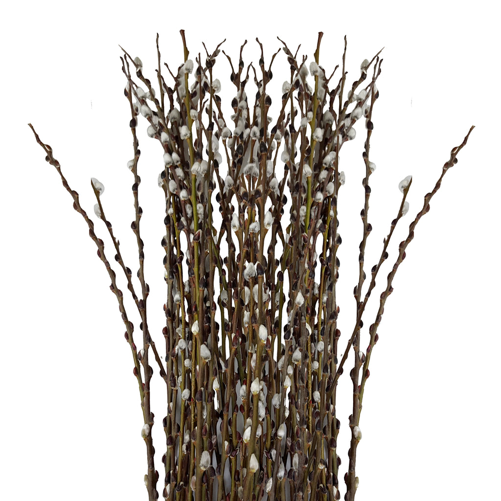 Pussy Willow - 150 Stems