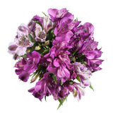 Alstroemeria, Purple