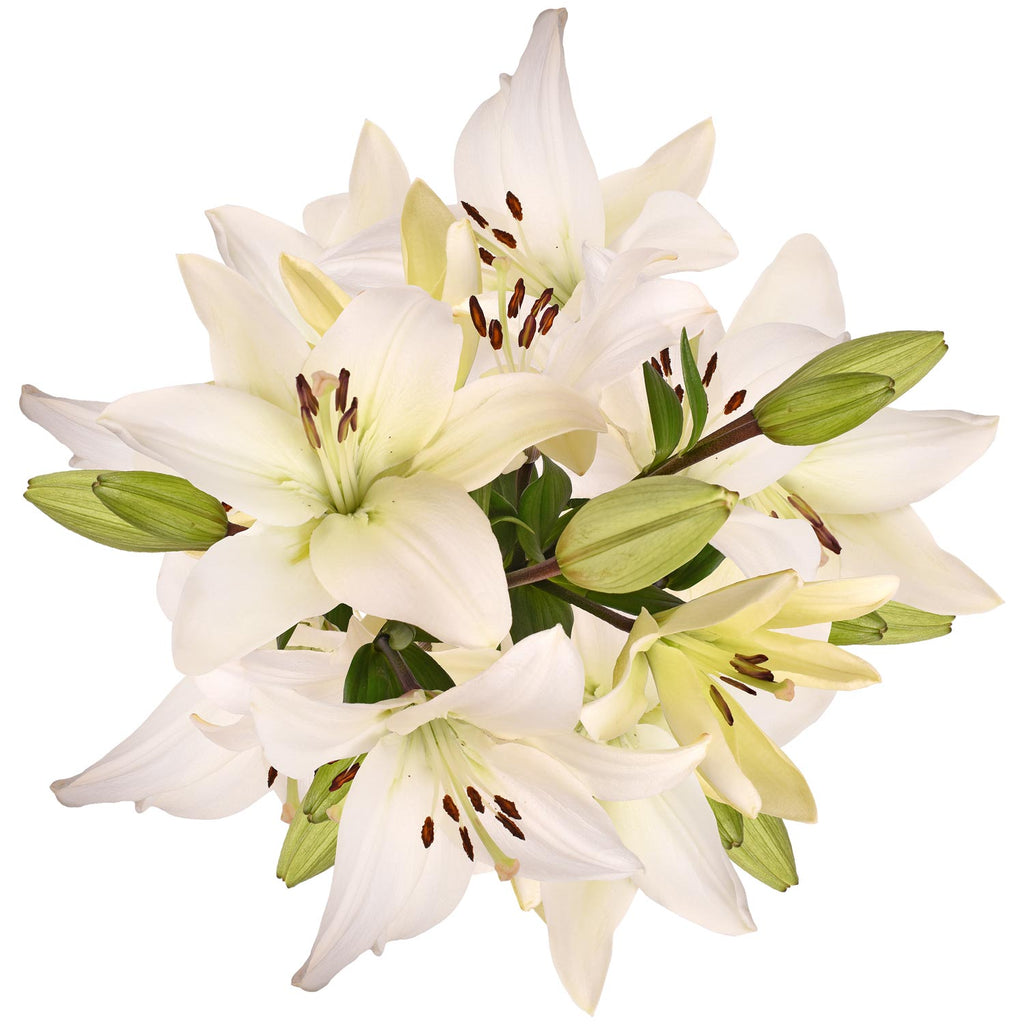 Blooming Boxes, LA Hybrid Lilies - White
