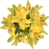 Blooming Boxes, LA Hybrid Lilies - Yellow