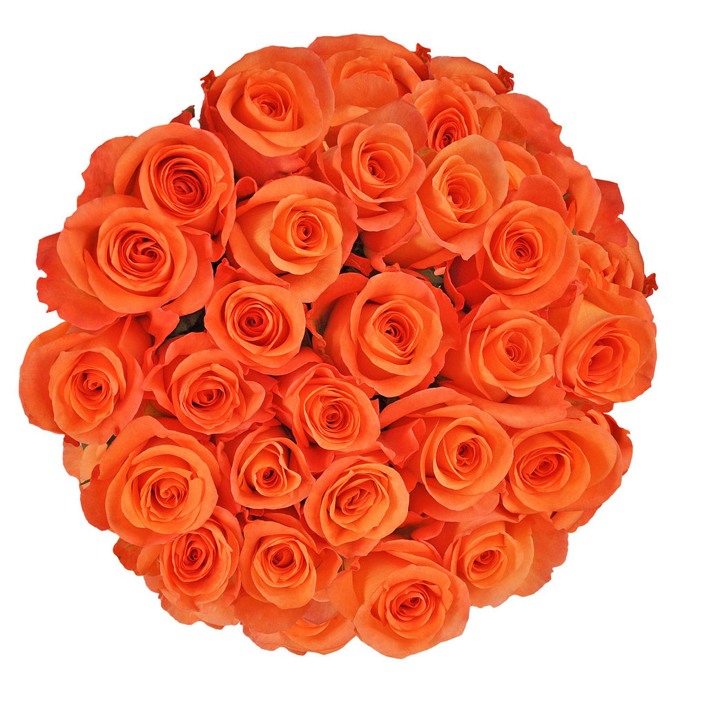 Blooming Boxes, Orange Roses