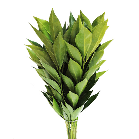 Natural Green  Flax