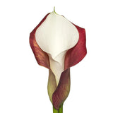 Red & White Double Calla Lilies