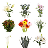 DIY Design Collection - Precious - 135 Stems